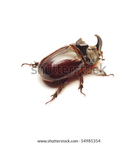 beetle isolated