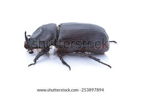 Beetle isolated on white background - stock photo