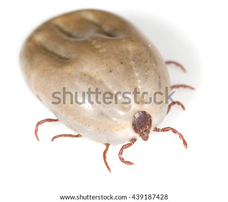 beetle mite on a white background - stock photo