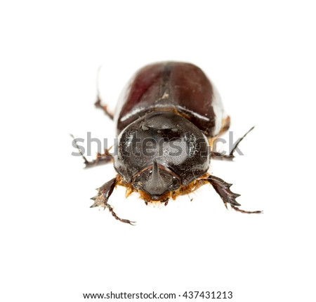 beetle on white background