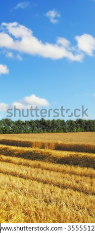 Before harvest - landscape photo from the countryside - stock photo