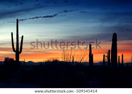 Before sunrise in the Organ Pipe Cactus National Monument, Arizona, USA