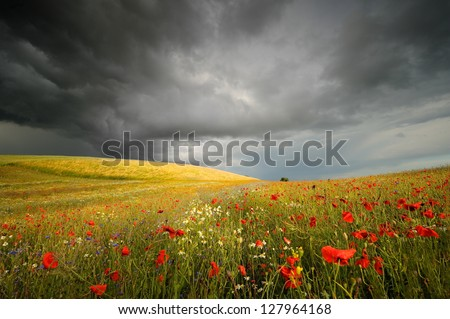 Before the storm, and gold field, and poppies - stock photo