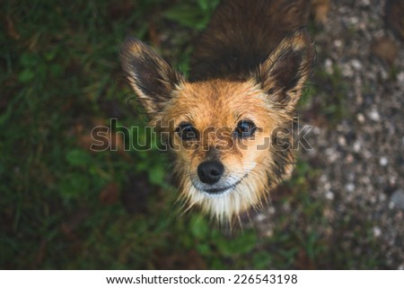 begging dog looking into the camera - stock photo