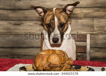 Begging for a Holiday Feast - stock photo
