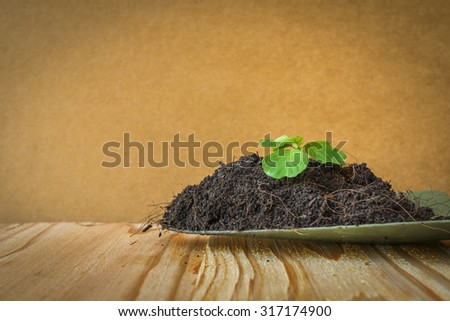 begining of a small plant - stock photo