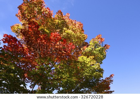 Beginning of autumn color in a forest. - stock photo