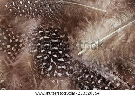 beige feathers - stock photo