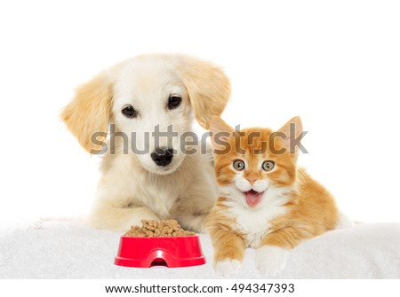 Beige puppy and red kitten watching
