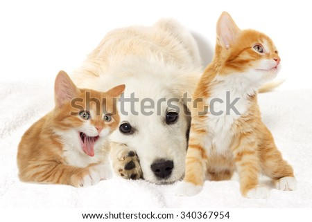 Beige puppy and yawning kitten looking