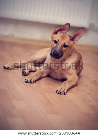 Beige puppy. Small not purebred puppy. Mongrel puppy. - stock photo