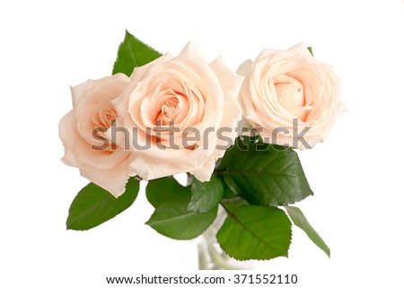 beige roses in a vase isolated.