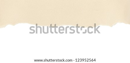 Beige textured paper with torn edge on white background - stock photo