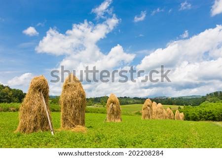 Bela krajina, Slovenia. Traditional hay stacks on the field. - stock photo