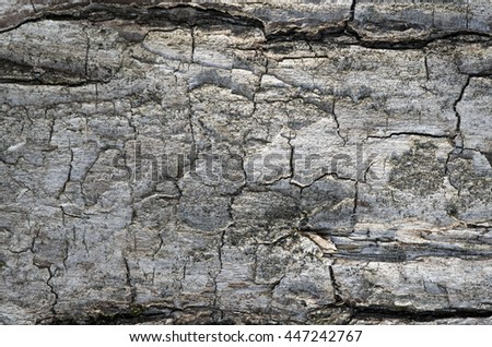 Belarus. Old willow tree on the shore of a quiet pond. Thick trunk is covered with a thick layer of bark. Fragment barrel surface. Macro. Close-up. Precise details at high magnification.