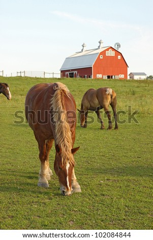 Belgian draft horses graze on a farm at Prophetstown State Park, Tippecanoe County, Indiana, with green grass and blue sky vertical - stock photo
