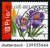 BELGIUM - CIRCA 2003: a stamp printed in the Belgium shows Crocuses, Crocus Sativus, Flowering Plant, circa 2003 - stock photo