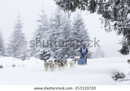 "BELIS, ROMANIA - FEBRUARY 7: Unidentified competitor during the Second edition of ""Belis Cup"" dog sledding competition on February 7, 2015 in Belis, Cluj, Romania."
