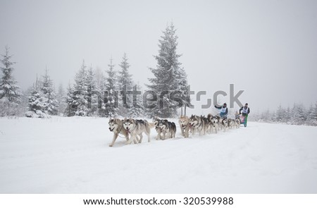 "Belis, Romania - FEBRUARY 7: Unidentified competitor racing during  ""Belis Cup"" dog sledding competition on February 7, 2015 in Belis, Cluj, Romania."
