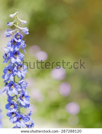 bell flower on blurred background - stock photo