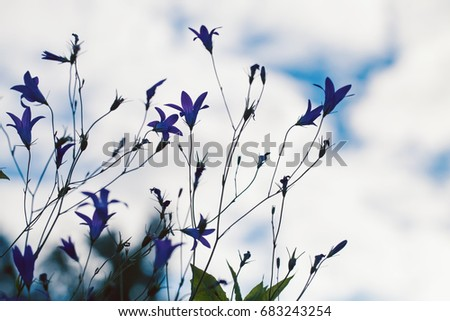 Bellflowers silhouettes in summer garden, closeup photo with soft selective focus
