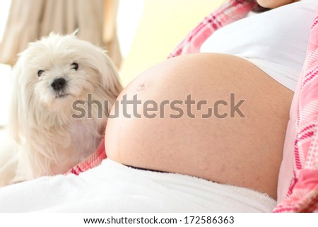 Belly of a Very Pregnant Woman with a dog in the background, in narrow focus