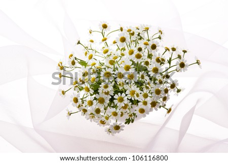 belonging to daisy family matricaria on veil - stock photo