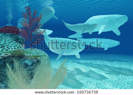 Beluga Whales - A pod of Beluga whales swim past by a colorful reef environment. - stock photo