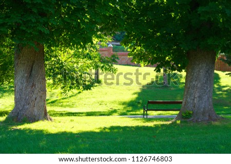 stock-photo-bench-and-two-trees-in-the-p