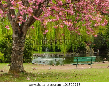 Bench at the pond shore under the cherry bloom - stock photo