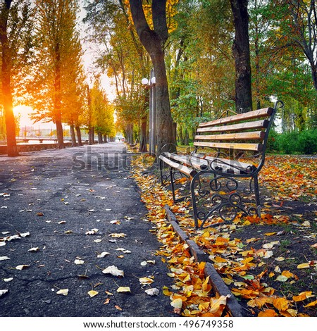 Bench in autumn park. Autumn landscape. Sunset time