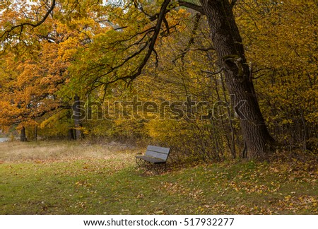 Bench in autumn park with oak trees
