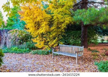 Bench in Fall season  park near japanese maple tree. Autumn landscape. - stock photo