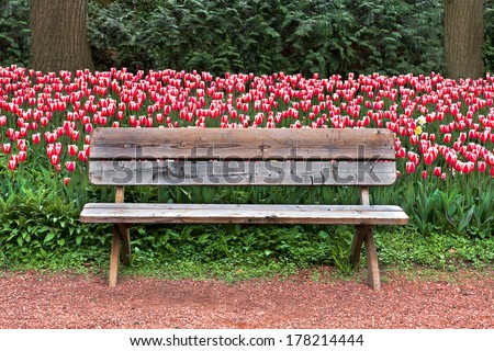 Bench in spring park. Tulips. Spring landscape. - stock photo