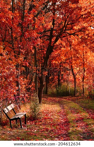 bench in the autumn park as nice natural background - stock photo
