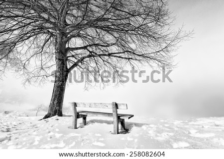 bench on a foggy and snowy winter day - stock photo