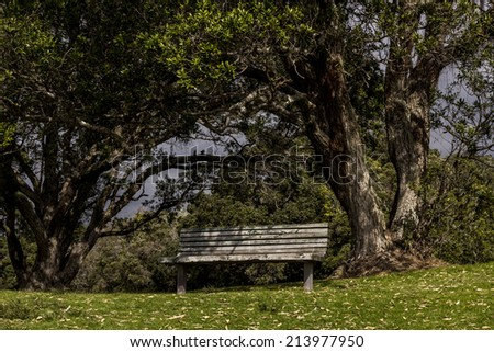 Bench seat under a tree