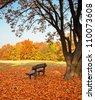 Bench with tree in autumn - stock photo