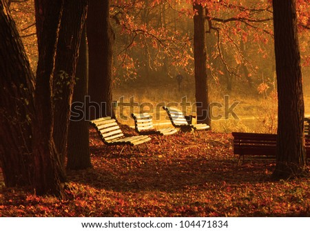 benches in the park in autumn
