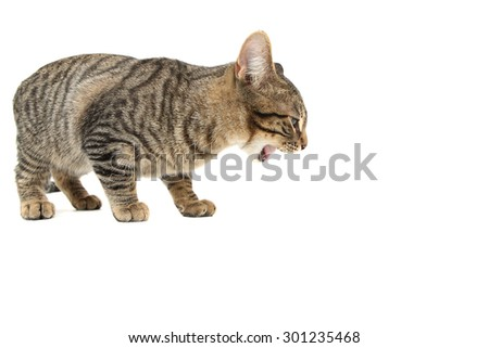 Bengal cat eating or being sick - stock photo