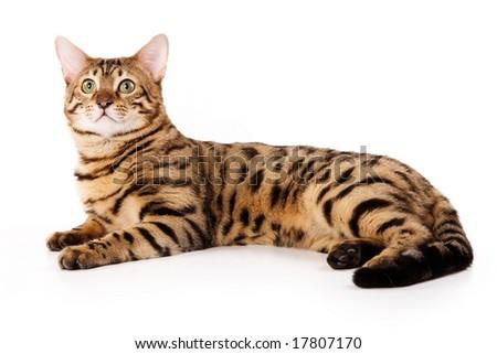 shallow cat litter box