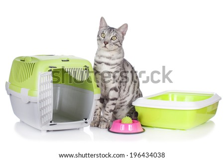 Bengal cat with basic cat stuff isolated