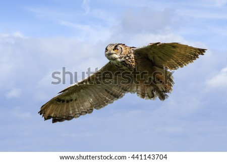 Bengal eagle owl in the air. A stunning Bengal eagle owl is seen in flight.