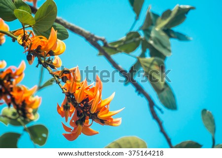 Bengal Kino in the tree by super color style  - stock photo