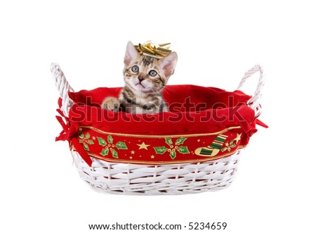 Bengal kitten with golden bow on head inside Christmas basket isolated on white - stock photo