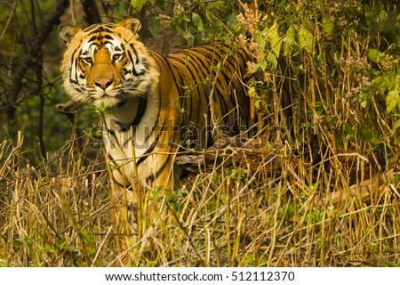Pictures of kanha national park madhya pradesh traditional dress