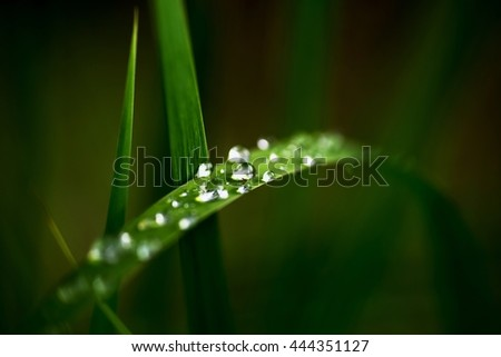 Bent blade of grass with water drops on dark green blurry background.