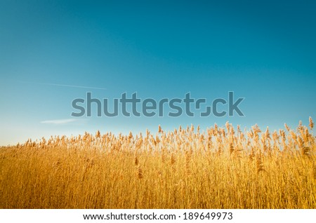 Bent grass field in Aina�¾u mole.