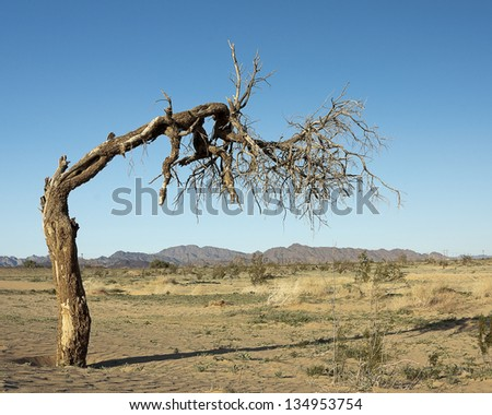bent tree - stock photo