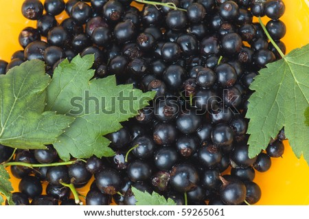 Berries of a black currant and leaves, a background - stock photo